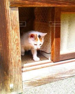猫の写真・画像素材[41707]