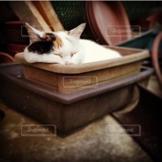 猫の写真・画像素材[41991]