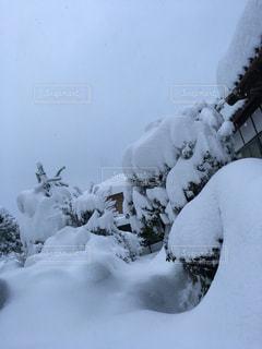 No.322660 雪