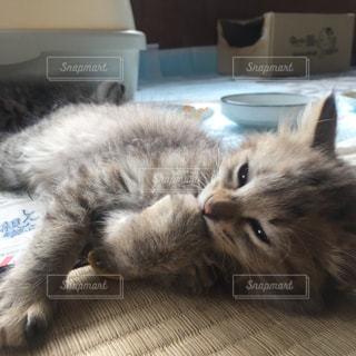 地面に横になっている猫 - No.777149