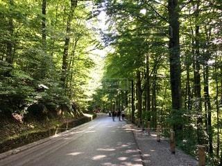 ドイツ ノイシュバンシュタイン城へ続く山道の写真・画像素材[3504114]