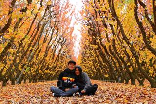木に坐っていたカップルの写真・画像素材[1242138]