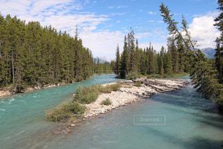森を流れる川の写真・画像素材[1532447]