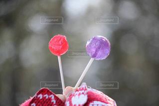 赤白とピンクの花の写真・画像素材[1532463]