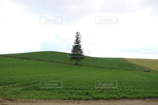 緑豊かな野原の接写の写真・画像素材[2140339]
