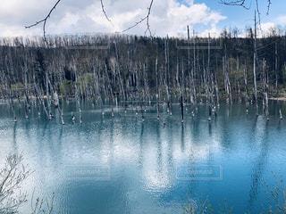 青い池の写真・画像素材[2140344]