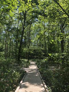 Favorite nature's walkの写真・画像素材[2490687]