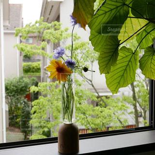 近くの花のアップの写真・画像素材[1207629]
