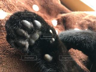 黒猫の肉球の写真・画像素材[1209505]