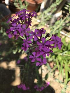 近くの植物に紫の花のアップの写真・画像素材[1208747]