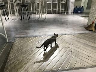 見廻り猫の写真・画像素材[1213457]