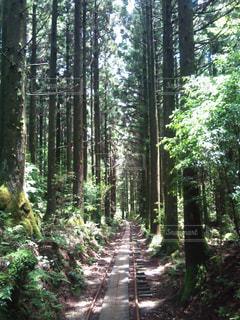 屋久杉コースの写真・画像素材[1209614]