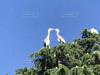 丘の上に立っている鳥の写真・画像素材[1239639]
