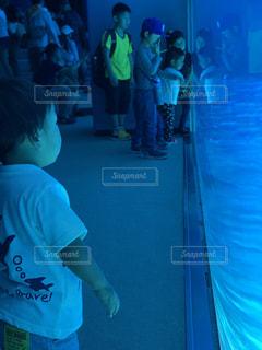 水族館の一コマの写真・画像素材[1210490]