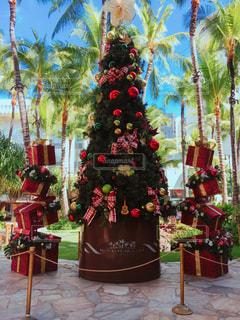 ハワイクリスマスツリーの写真・画像素材[1210472]