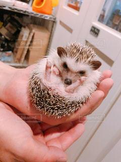 小動物を持っている手の写真・画像素材[1210882]