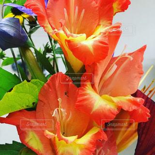 カラフルの花で一杯の花瓶の写真・画像素材[1210696]