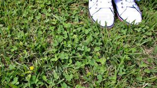 草の上の靴の写真・画像素材[2864623]