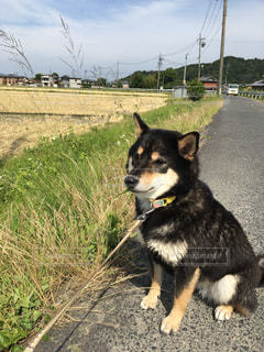芝生の上の小さな黒い犬立っての写真・画像素材[1257912]
