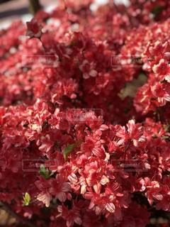 近くの花のアップの写真・画像素材[1211812]