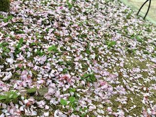桜🌸🇯🇵の写真・画像素材[1211813]
