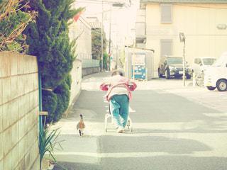 野良猫とおばぁちゃんのお散歩の写真・画像素材[1212624]
