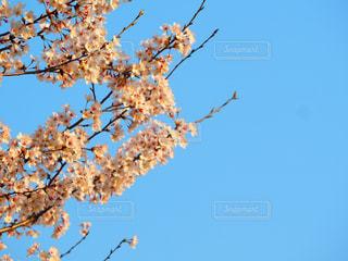 春の青空の写真・画像素材[1212625]