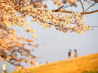 春の夕暮れ時のカップルの写真・画像素材[1212626]