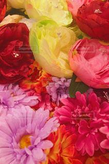 近くの花のアップの写真・画像素材[1218089]