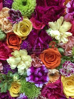 花のアップの写真・画像素材[1312207]