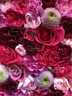 お花の写真・画像素材[1312208]