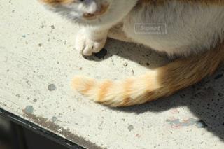 地面に横になっている猫の写真・画像素材[1211156]