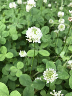 近くの花のアップの写真・画像素材[1237259]