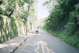初夏の道の写真・画像素材[1226626]