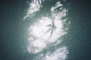 木漏れ日の写真・画像素材[1227172]