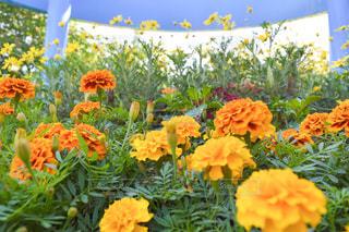 USJでカラフルな花を散策の写真・画像素材[1212856]