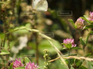 蝶と蜂の写真・画像素材[1225518]