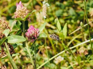 蜂の写真・画像素材[1225520]