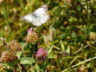 蝶と蜂の写真・画像素材[1225521]