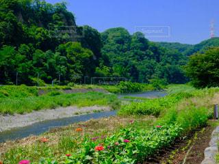 川の写真・画像素材[1266665]