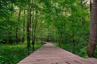 森に向かう道の写真・画像素材[1273185]