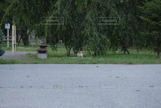 こっち見てる猫の写真・画像素材[1290556]