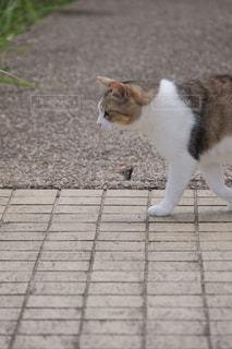 草の中に立っている猫の写真・画像素材[1290557]