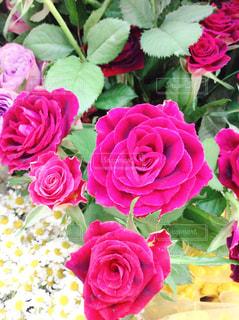 近くの花のアップの写真・画像素材[1215844]