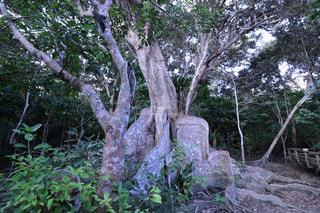 名前を忘れた木の写真・画像素材[1213294]