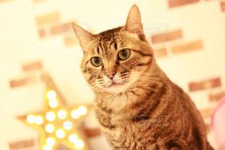 キジトラ猫の写真・画像素材[1213842]