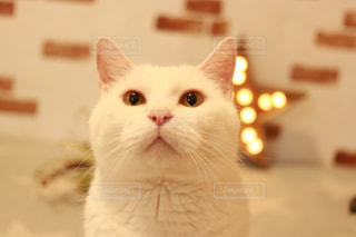 白猫アップの写真・画像素材[1213843]