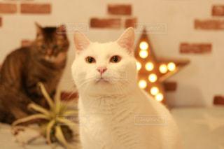 またたびを欲しがる猫の写真・画像素材[1213844]