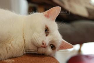 白猫の毎日の写真・画像素材[1213846]