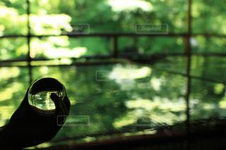 カメラにポーズ鏡の前に立っている人の写真・画像素材[1213549]